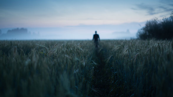Обои Человек на тропинке среди пшеничного поля