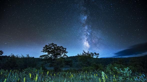 Обои Поляна в лесу под красивым ночным небом