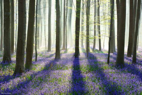 Обои Весенний лес освещен солнечными лучами, фотограф Kilian Schönberger