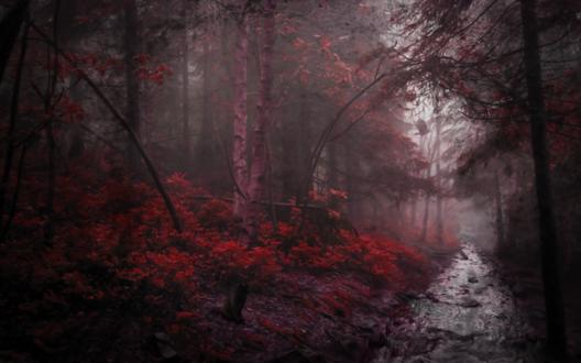 Обои Лесная речка посреди леса в темно-красных тонах