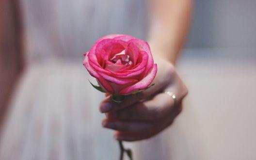 Обои Девушка держит в руке розовую розу с кольцом