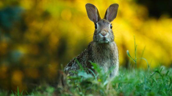 Обои Смешной заяц сидит на траве