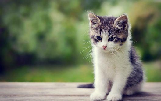 Обои Грустный маленький котенок на размытом фоне