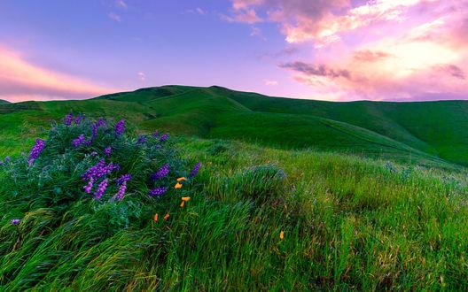 Обои Зеленые луга с разбросанными цветами на фоне розового закатного неба