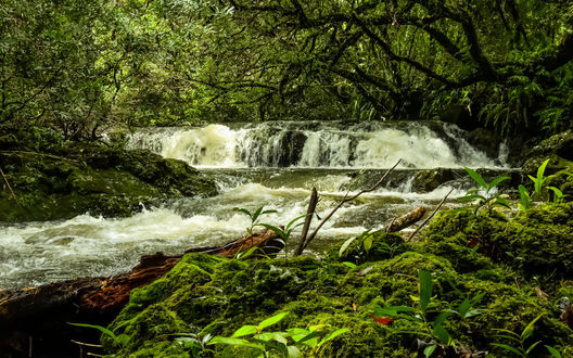 Обои Водопад, затерявшийся в лесу среди деревьев