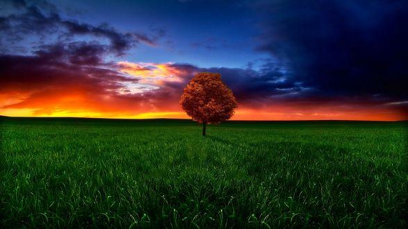 Обои Одинокое дерево на зеленом поле на фоне огненного заката, фотограф geken