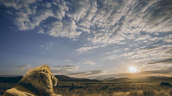 Обои Лев отдыхает на природе