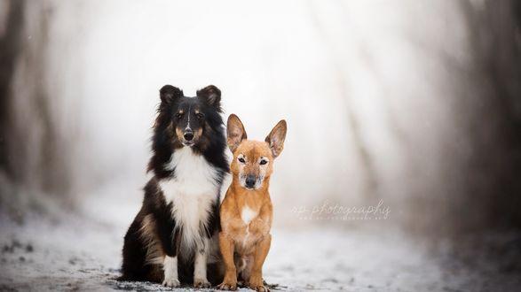 Обои Две собаки на размытом фоне деревьев