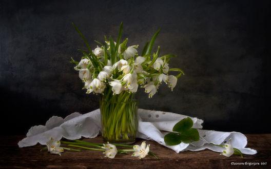 Обои Букет белоцветника в прозрачном стакане на столе с белой салфеткой, фотограф Элеонора Григорьева