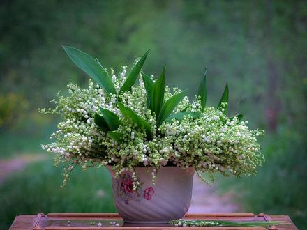 Обои Букет ландышей в белом цветочном горшке на зеленом фоне, фотограф Вячеслав Мищенко