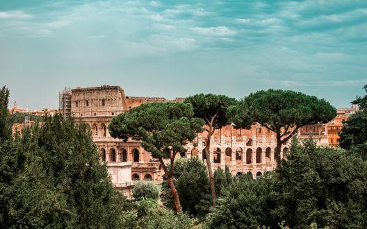 Обои Римский Колизей, наполовину скрытый зелеными деревьями