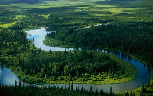 Обои Извилистая река среди крупных лесных массивов
