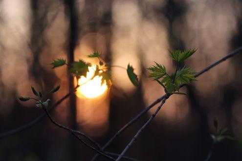 Обои Зеленые листки на фоне заходящего солнца