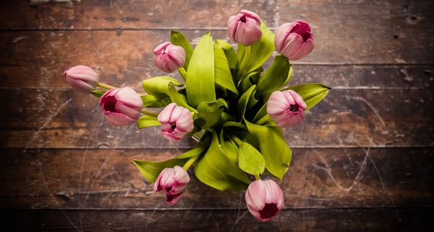 Обои Букет розовых тюльпанов, вид сверху