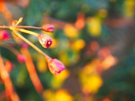 Обои Распускающиеся цветы на ветке