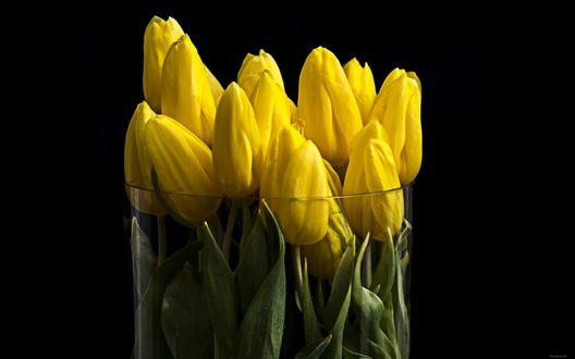 Обои Желтые тюльпаны в стеклянной вазе на черном фоне