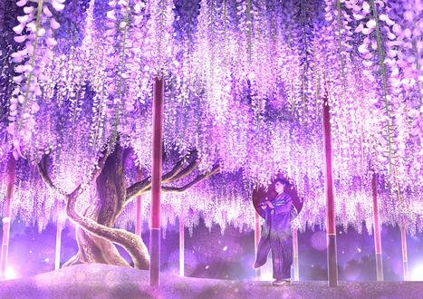 Обои Девушка, одетая в кимоно, с зонтиком стоит под цветами глицинии, by Kupe