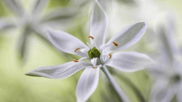 Обои Белый цветок в макросъемке