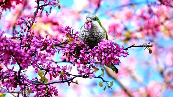 Обои Птица на цветущей ветке