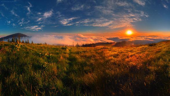 Обои Поле в лучах заходящего солнца с кромкой леса вдали, by Slava Lucky