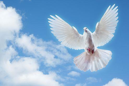 Обои Белый голубь на фоне голубого неба и облаков