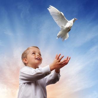 Обои Белый голубь на руками мальчика на фоне неба и облаков
