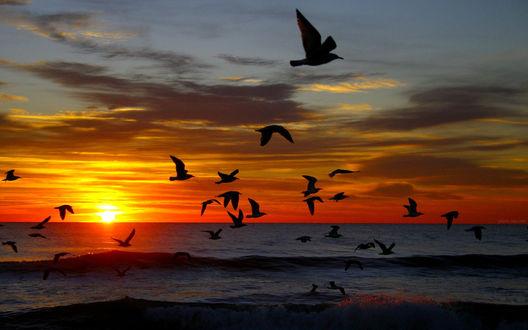 Обои Птицы над водой и в небе на фоне красивого заката