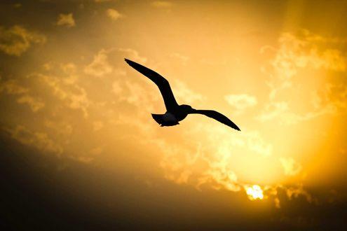 Обои Птица в небе летит к солнцу
