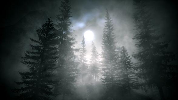 Обои Серый лес покрытый туманом, сквозь который видна луна