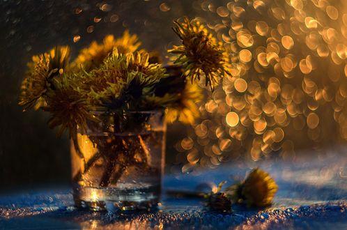 Обои Одуванчики в стакане с водой на фоне бликов