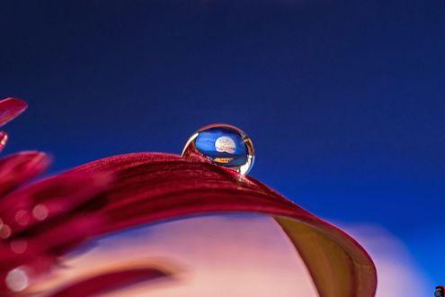 Обои Капля росы на лепестке цветка, фотограф Abdularhman Adi