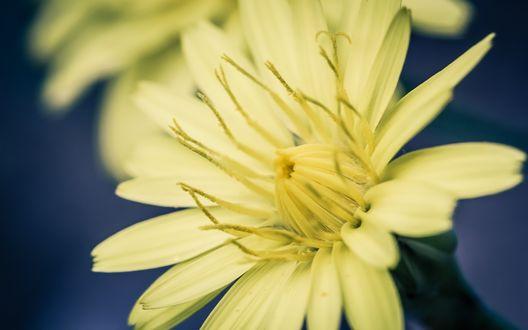 Обои Желтый цветок крупным планом