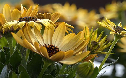 Обои Много желтых цветов крупным планом