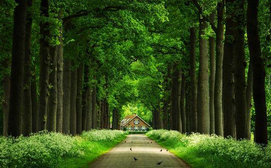 Обои Дорога посреди деревьев ведет к избе