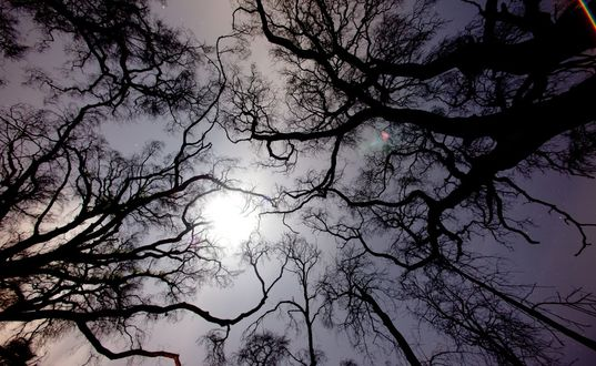Обои Блеклая луна проглядывает с затянутого тучами неба сквозь черные покрученные ветки деревьев