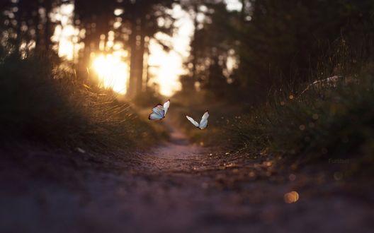 Обои Две бабочки порхают над тропинкой, фотограф Stijn Dijkstra