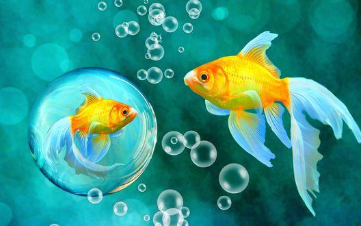 Обои Золотая рыбка увидела свое отражение в большом пузыре