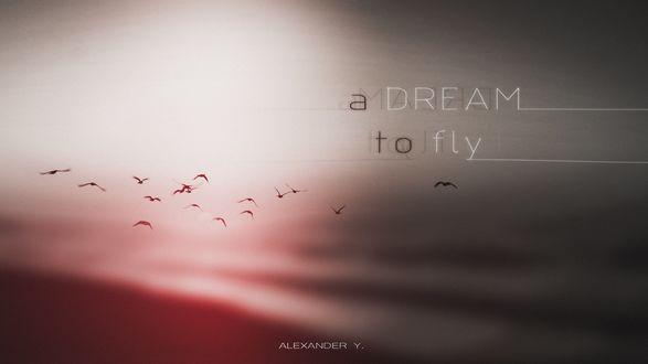 Обои Фраза A Dream to fly / Мечта летать на фоне птиц в пасмурном небе, by Alexander Y