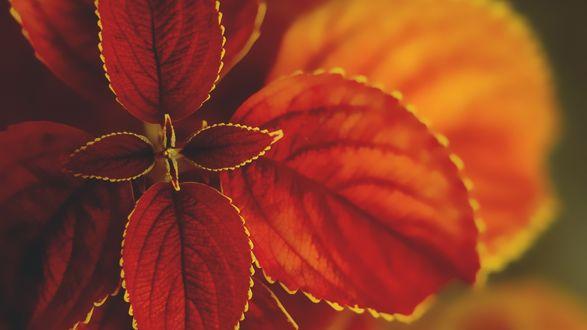 Обои Цветок крупным планом
