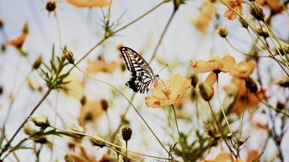Обои Бабочка на желтом цветке