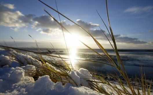 Обои Трава пробивается сквозь тающий снег весной
