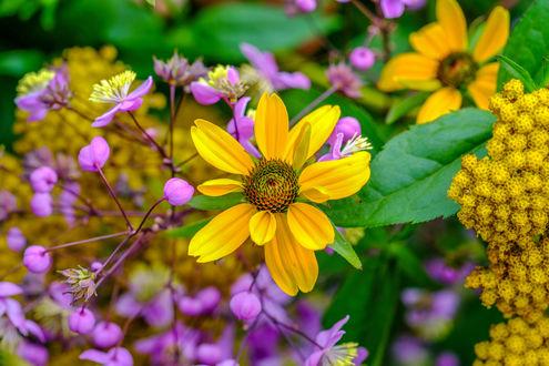 Обои Желтые и сиреневые цветы