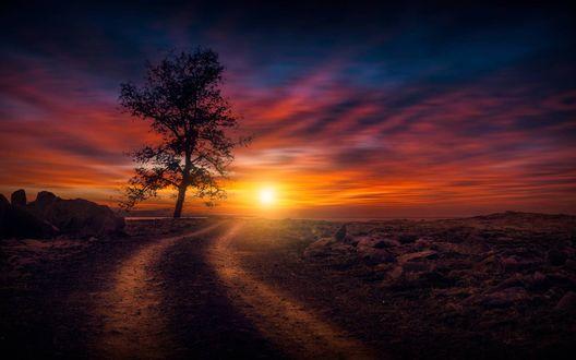 Обои Одинокое дерево у дороги на фоне закатного неба