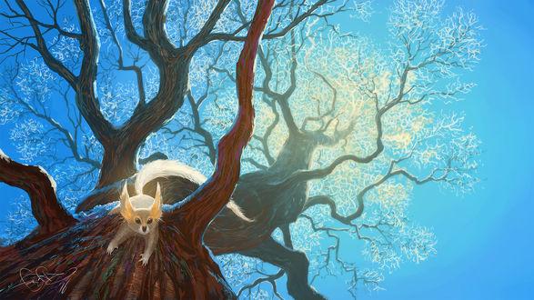 Обои Животное на дереве, by fear-sAs