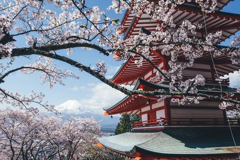 Обои Цветущая сакура на фоне дома, фотограф Takashi Yasui