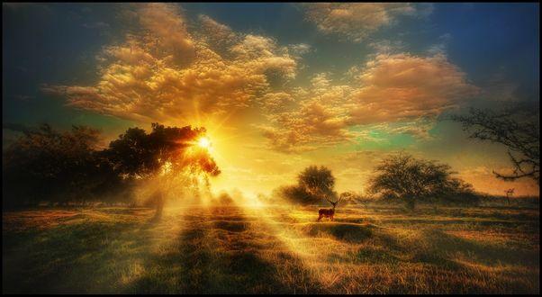 Обои Олень на природе, освещенной солнцем, фотограф jose arley agudelo