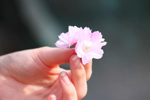 Обои В руке девушке весенние цветы