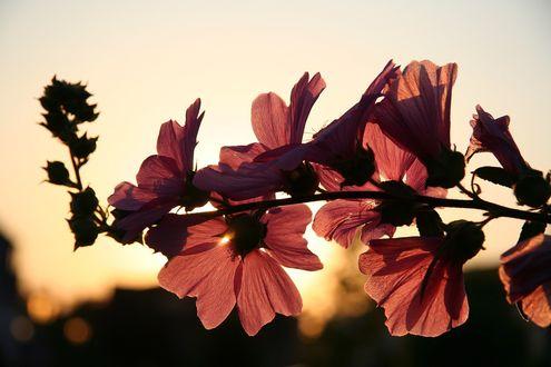 Обои Розовые цветы на фоне неба