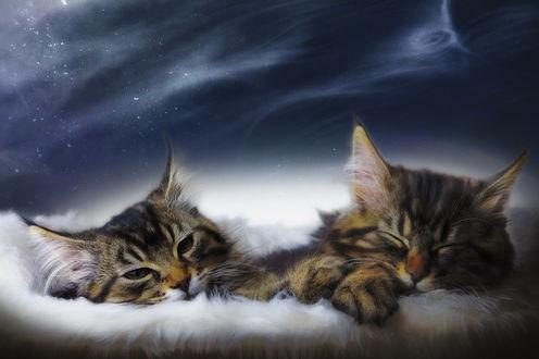 Обои Дремлющие полосатые, милые котята, by manu34