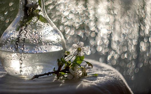 Обои Веточка цветущей яблони и стеклянная ваза на белой скатерти в свете блесток боке, фотограф Марина Соколовцева